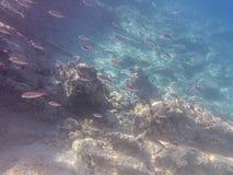 Aponissos海滩的水下的海平面照片,Agistri海岛,萨龙湾,Attica,希腊 图库摄影