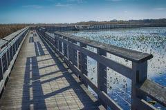 Aponte o parque nacional de Pelee e o passeio à beira mar na queda, Ontário, Ca imagens de stock royalty free