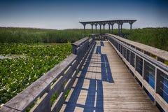 Aponte o passeio à beira mar no verão, Ontário do parque nacional de Pelee, Cana Imagens de Stock