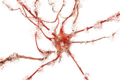Apoptosis of neuron which is observed in different diseases Stock Images