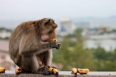 Apor äter bananer Fotografering för Bildbyråer