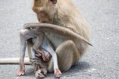 Apor fostrar och barnet royaltyfri foto