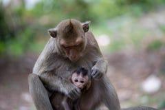 Apor fostrar och barnet arkivbilder
