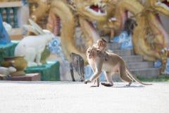 Apor fostrar och barnet arkivfoto