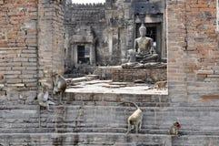 Apor i en tempel. Lopburi Thailand Arkivfoto