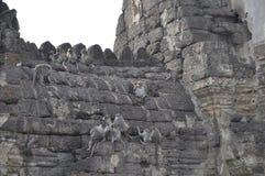 Apor i en tempel. Lopburi Thailand Arkivbild