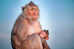 Apor med behandla som ett barn Royaltyfri Foto