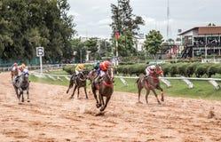Aposta do jogo da corrida de cavalos Imagem de Stock Royalty Free