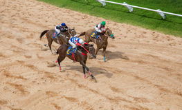 Aposta do jogo da corrida de cavalos Foto de Stock Royalty Free