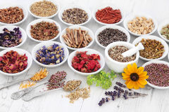 Apothecary Flowers and Herbs Stock Images