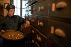 Apothecary worker. Taking dry herbs out of drawer Stock Image