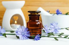Apothekenflasche mit Zichorie-Extrakt-Tinktur, Infusion, Öl stockfotos