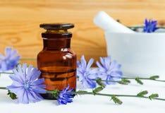 Apothekenflasche mit Zichorie-Extrakt-Tinktur, Infusion, Öl lizenzfreies stockfoto