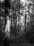 Appalachainsleep in het Nationale Park van Great Smoky Mountains Stock Foto