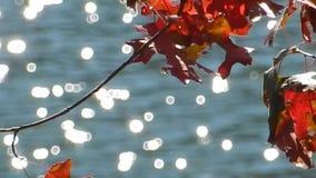 Appalachi Autumn Red Oak Leaves sul lago WV top piana video d archivio
