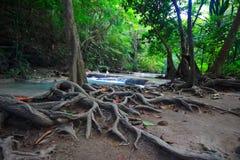 Appalachi della radice dell'albero, ramo, cascata fotografie stock