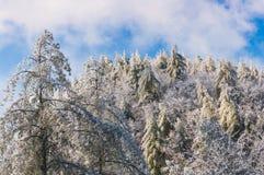 Appalachia śnieg Obrazy Royalty Free