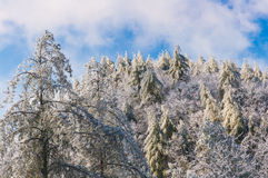 Appalachia snow. Royalty Free Stock Images