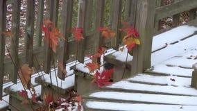 Appalachian Autumn Red Oak Leaves, snow on deck steps stock footage
