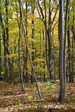 Appalachian Autumn Trees Stock Photo