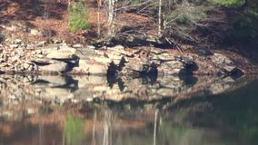 Appalachian cliff, Pine Trees, lake reflections green, brown, tan. Dynamic backgrounds, themes, wallpaper. Organic video art all natural sunlight reflects on stock video footage