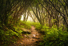 appalachian craggy dimmaträdgårdar som fotvandrar den spöklika trailen Royaltyfria Bilder