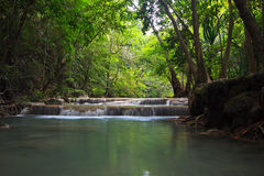 Appalachian da árvore, ramo, cachoeira fotografia de stock royalty free