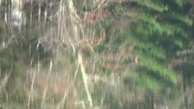 Appalachian Fall Trees Reflection on Lake Surface Brown Blue Green stock footage