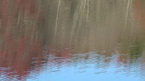 Appalachian Fall Trees Reflection on Lake Surface Red Blue Green. Sunlight, reflection and wind make Dynamic backgrounds, themes, wallpaper. Organic art all stock video