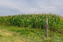 Appalachian ślad kopii blask przy Kukurydzanym polem Fotografia Royalty Free