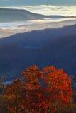 Appalachian Mountains At Sunrise And Tree Foliage Royalty Free Stock Photos