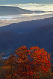 Appalachian mountains at sunrise and tree  foliage Royalty Free Stock Photos
