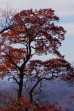 Appalachian mountains at sunset and autumn foliage Stock Photos