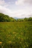 Appalachian slingavandring 2 för sommar Royaltyfria Bilder