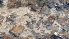 Appalachian Stream. A clear Mountain Stream flows in the Appalachians stock video footage