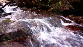 Appalachian Stream. An Appalachian Stream courses through the forest stock video