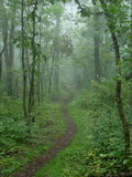 Appalachian Trail. Wooded forest scene stock images