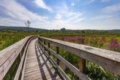 appalachian trail fotografering för bildbyråer