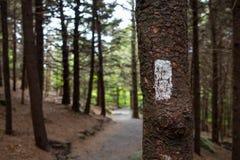 Appalachian Trail Blaze przy Carvers Gap fotografia royalty free