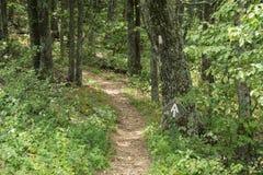 Appalachian Trail in the Blue Ridge Mountains Royalty Free Stock Photos