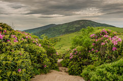 Appalachian Trail Cuts Through Rhododendron Garden Royalty Free Stock Photography