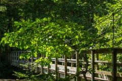 Appalachian Trail Footbridge Royalty Free Stock Photo