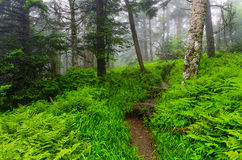 Appalachian Trail, Great smoky Mountains. A foggy morning along the Appalachian Trail near Clingmans Dome in the Great Smoky Mountain National Park in Tennessee Stock Photography