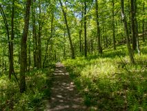 Appalachian Trail Through Lush Forest, Delaware Water Gap Royalty Free Stock Photos