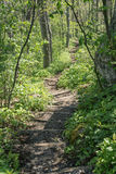 Appalachian Trail in the Mountains Royalty Free Stock Images