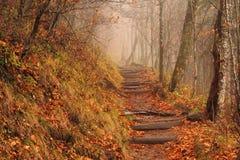 Appalachian Trail at Newfound Gap Royalty Free Stock Image