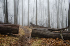 Appalachian Trail path. In the fog in Georgia royalty free stock photo