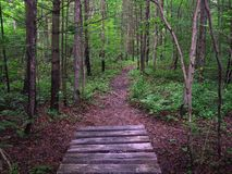 Appalachian Trail in Pennsylvania Royalty Free Stock Photo