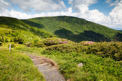 Appalachian Trail Roan Mountain TN and NC. The Appalachian Trail heading toward Jane Bald on Roan Mountain along the border of North Carolina and Tennessee royalty free stock photo