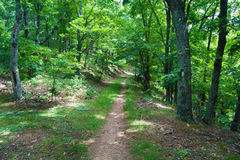 The Appalachian Trail in Virginia Stock Images